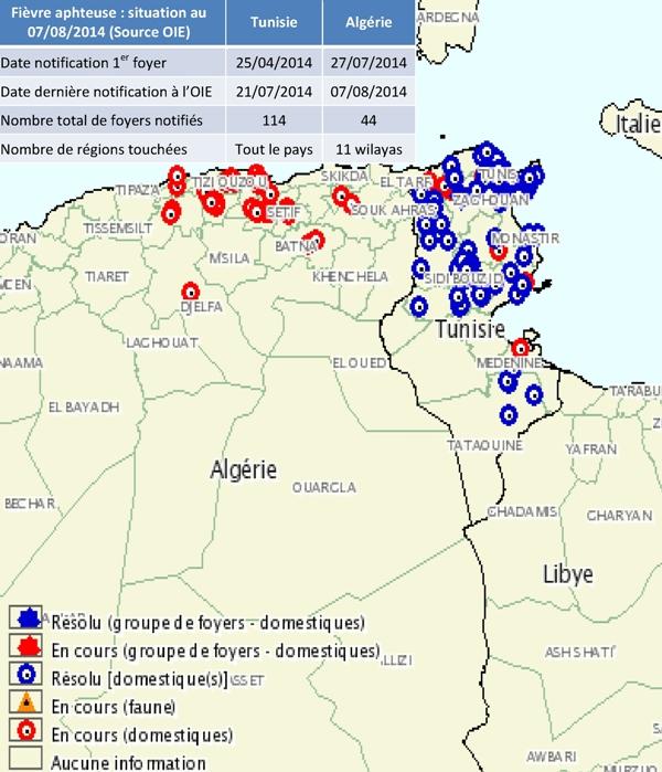 La FA (sérotype O) est apparue en Tunisie fin avril 2014. Le 27 juillet, l'Algérie annonçait son 1er foyer suite à une importation de taurillons venant de Tunisie.