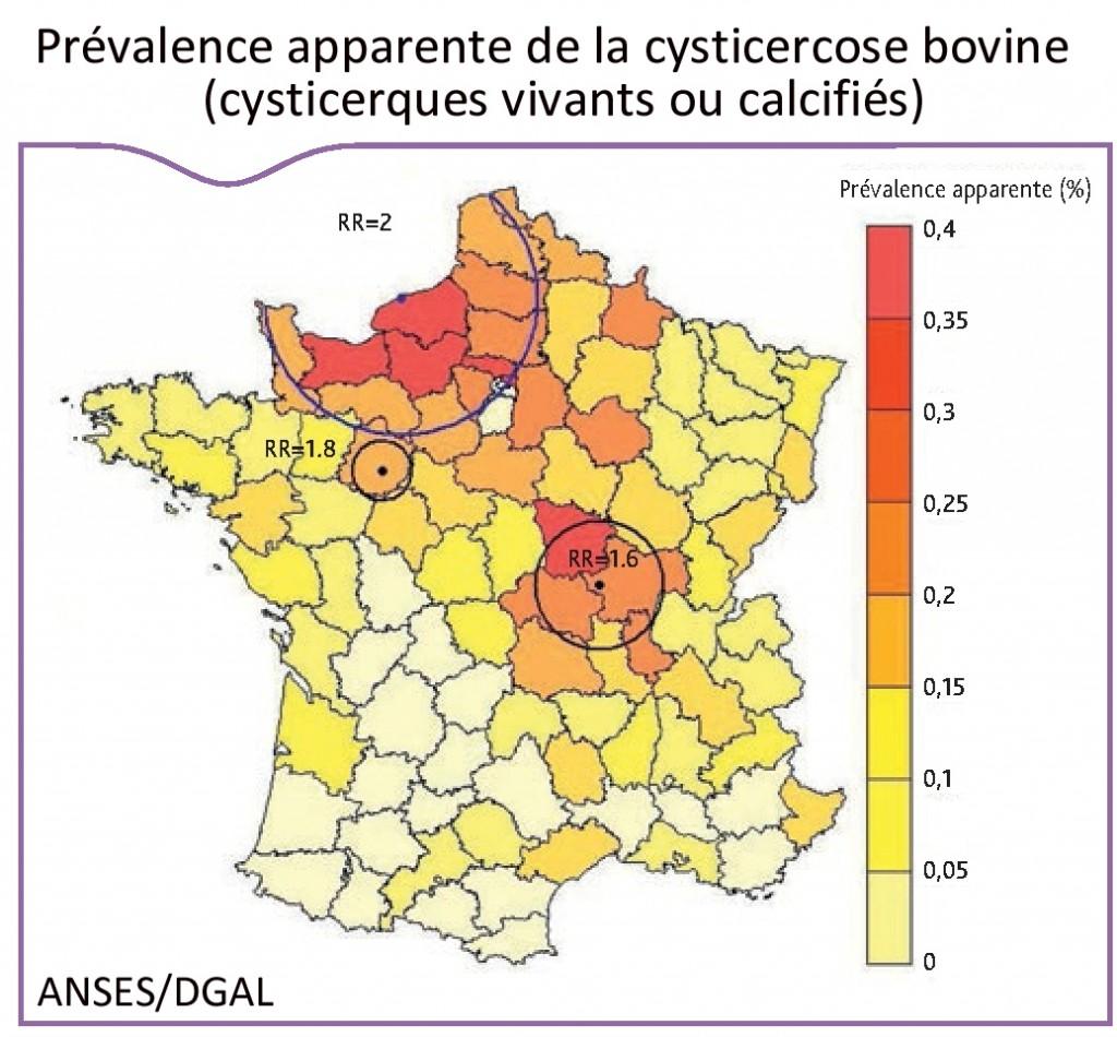 Les informations relatives à 4.564.065 bovins abattus en France en 2010 dans 181 abattoirs ont permis d'estimer la prévalence apparente de la cysticercose quel que soit son stade de développement à 0,142 % et celle de la cysticercose à cysticerques vivants à 0,013 %. En tenant compte de la sensibilité de détection à l'abattoir d'un animal atteint de cysticercose, la prévalence réelle de la cysticercose a pu être estimée à 1,23 % et celle de la cysticercose à cysticerques vivants à 0,113 % (source : ANSES/DGAL). Pour plus d'informations, consultez le bulletin épidémiologique, santé animale et alimentation n°63.