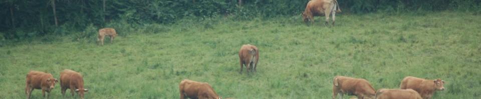 Prairie lisière de bois
