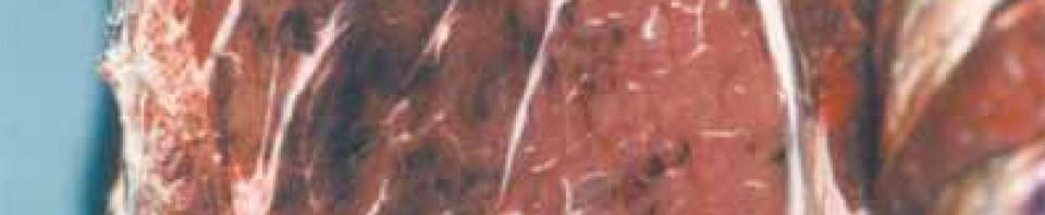 Le tiquetage se manifeste par la présence de multiples taches de sang dans les muscles et les abats rouges. Ces défauts rendent la viande non commercialisable pour des questions de présentation, d'où sa saisie au stade de l'abattoir, même si elle demeure parfaitement consommable.