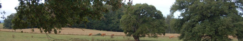Chênes vaches foin (GDS Creuse)